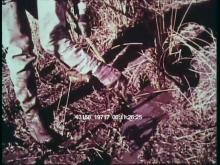 13158_19717_louisiana6.mov