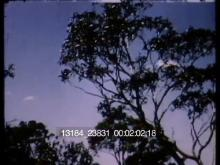 13184_23831_australia1.mov