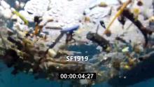 SF1919_pollution_1080.mp4