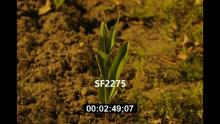 SF2275_flower time_720.mp4