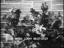 90001_ld041_2-27.mov