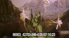 90003_42703_246-4_09.mov