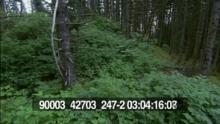 90003_42703_247-2_07.mov