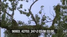 90003_42703_247-2_12.mov