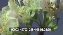 90003_42703_248-4_02.mov