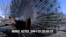 90003_42703_249-1_01.mov