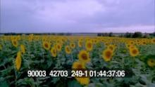 90003_42703_249-1_22.mov