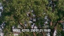 90003_42703_250_25.mov