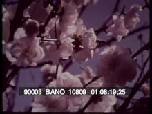 90003_BANO_10809_04.mov
