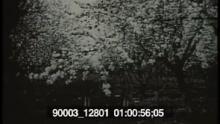 90003_12801_02.mov
