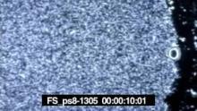 FS_ps8-1305 TC.mov