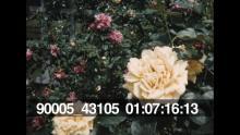 90005_43105_04.mov