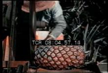 12554_pineapples.mp4