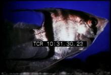 12555_modern_aquarium.mp4