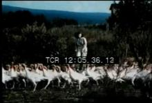 12567_turkey_feather_dresser.mp4