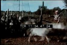 12569_Shetland_Ponies.mp4