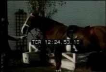 12569_horse_toupee .mp4