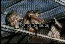 12567_lady_zoo_keeper.mp4
