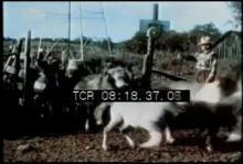 12568_shetland_pony_farm.mp4
