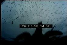 12567_largest_aquarium.mp4