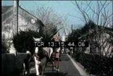 12570_Horse_Snoods.mov
