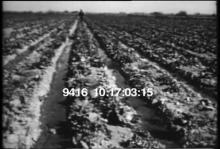 9416_imperial_valley.mp4