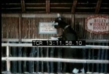 12570_Petting_Zoo.mov