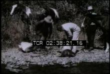12571_beaver_relocation.mp4