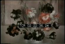 12571_feather_flowers.mp4