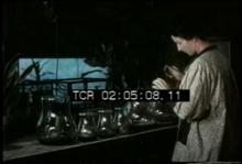 12571_insect_feeder.mp4
