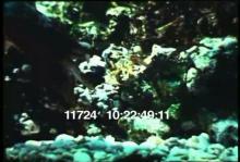 11724_cuttlefish1.mp4