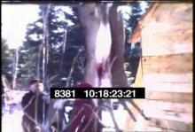 8381_deer_hunting4.mp4