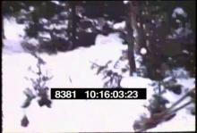 8381_deer_hunting2.mp4