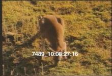 7489_kangaroo.mp4