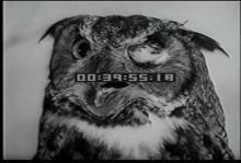 12562_animal_study1.mp4