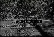 12560_animal_habitats1.mp4