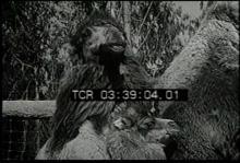 12560_baby_animals2.mp4