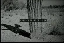 12562_desert_animals2.mp4