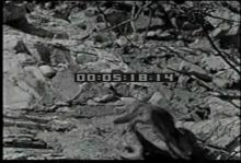12562_military_animals3.mp4