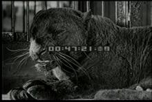 12563_circus_animals4.mp4