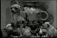 12561_animal_babies1.mp4