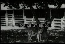 12561_barn_animals3.mp4