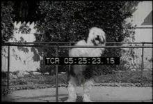 12561_dog_breeds2.mp4