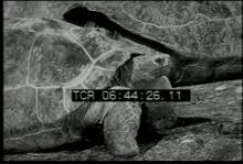 12561_smart_animals3.mp4