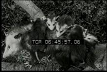 12561_smart_animals4.mp4