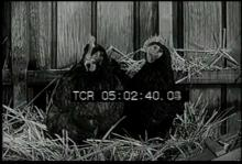 12561_farm_animals1.mp4