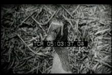 12561_farm_animals2.mp4