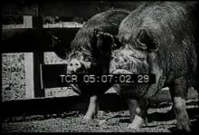 12561_farm_animals4.mp4