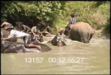 13157_burma_elephant6.mp4