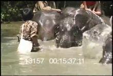 13157_burma_elephant7.mp4